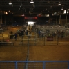 Livestock Sale- 60 pens, 40 tie-stalls, 2 judging areas, 1 photo area